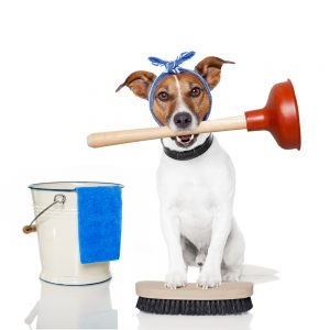 Dog with a plunger